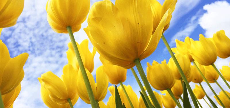 flowers-growing-impact-test